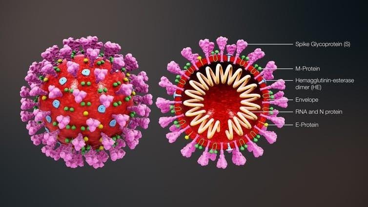 Corona Virus Image Model