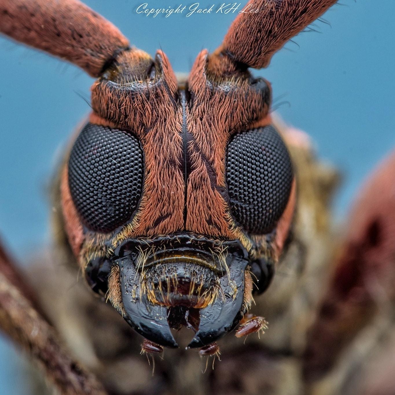 Wasp's eyes