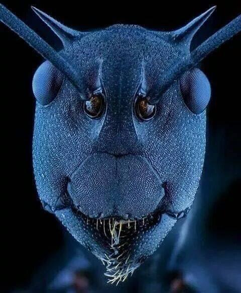 Bug Intelligence - Ant