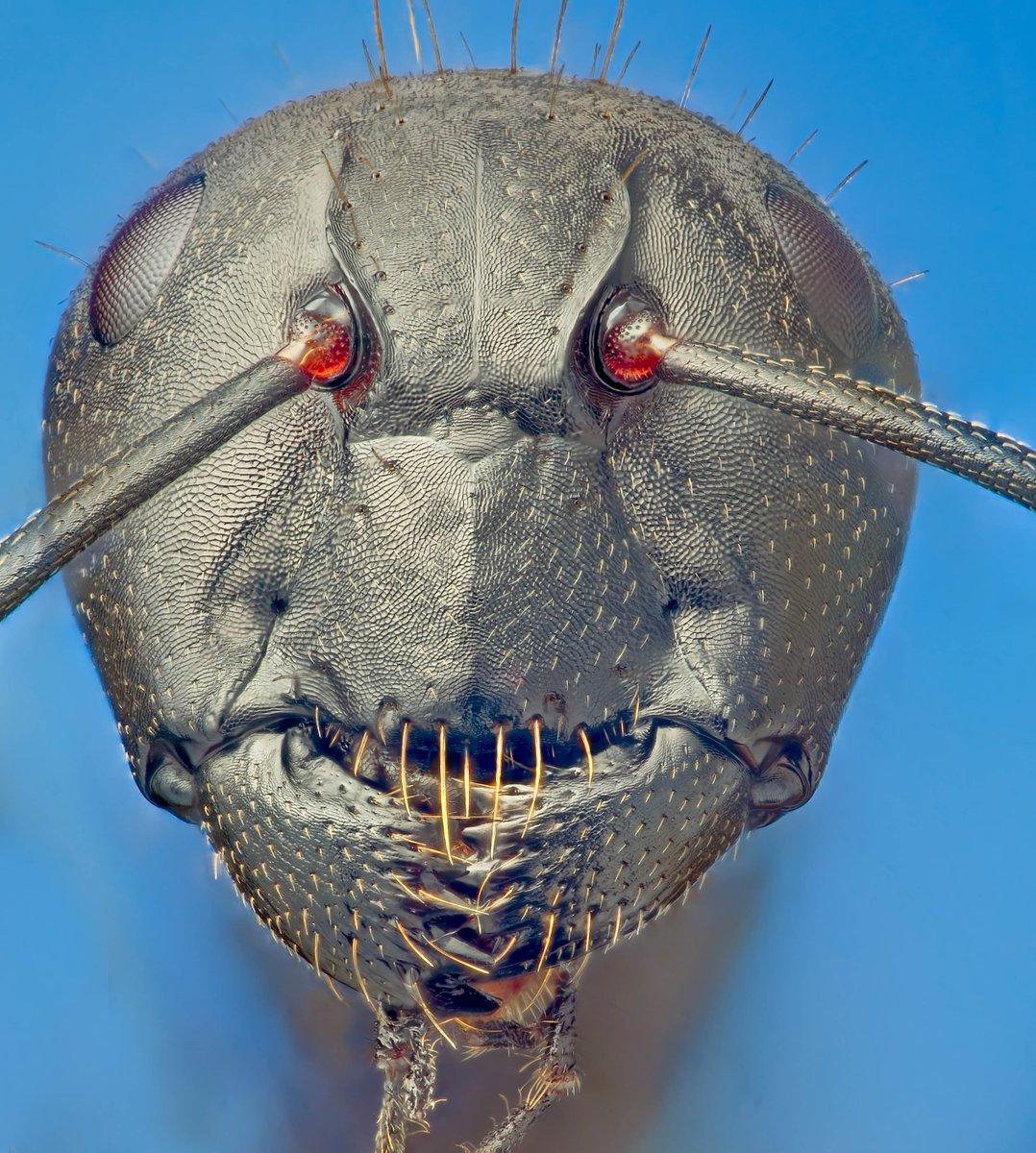Bug Intelligence